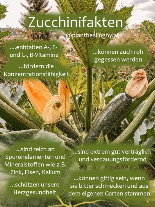 Zucchinifakten