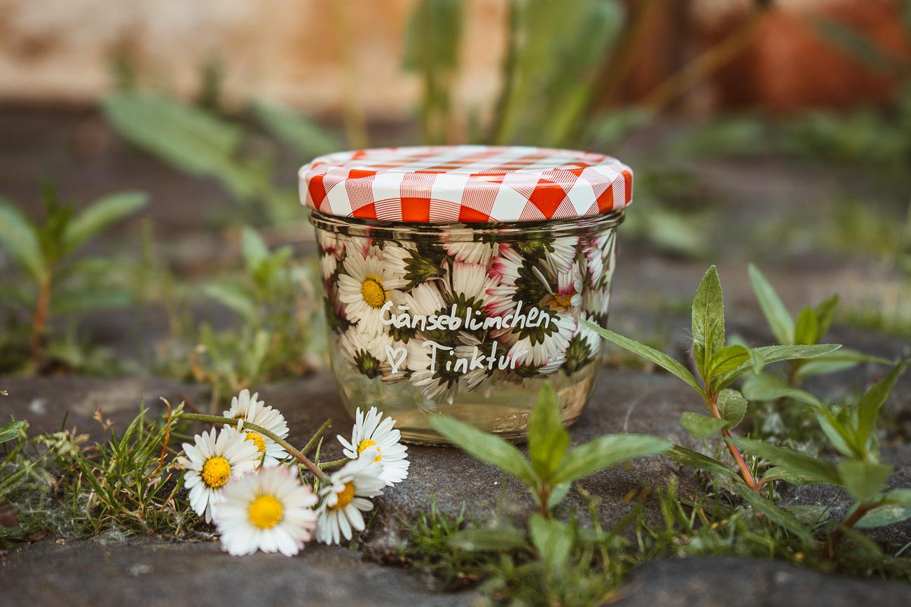 Gänseblümchen-Tinktur selber machen - Rezept gegen Akne, unreine & fettige Haut, Frühjahrsmüdigkeit, blaue Flecken, Erkältungen uvm.